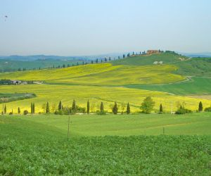 Typical Tuscan landscape with yellow meadows